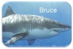 Brucethumb2