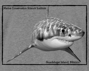 Shark Heather