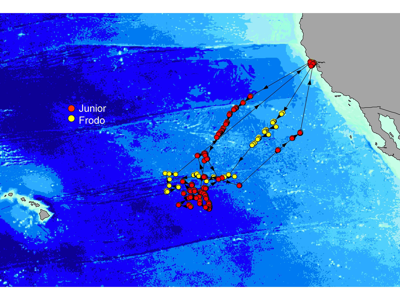 Tagging Updates | Marine CSI